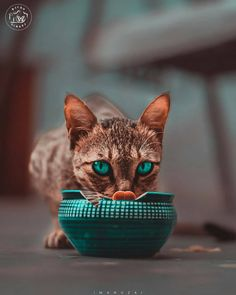 Shh 🤫 be quiet! Look someone is watching us👁 – built-in-neutrons Crazy Cat Lady, Crazy Cats, Beautiful Kittens, Beautiful Eyes, Pink Suit, Cute Photography, Indian Festivals, Fluffy Cat, Cat Memes