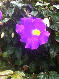 Linda flor roxa na Rua Serra da Bocaina