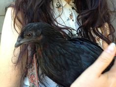This hen looks like raven!