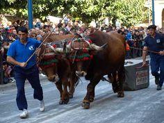 Ferias de otoño en Tafalla « Navarra Zona Media