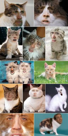 Nicolas Cage As Cats - who does this?! im dying!