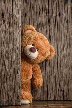 Bildergebnis für teddybär