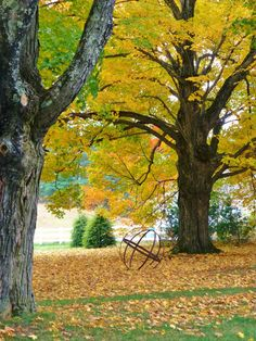 Life starts all over again when it gets crisp in the fall.   - F. Scott Fitzgerald -       It's that magical time of year in New England....