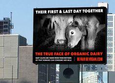 Vegan Campaign - Google Search https://www.google.co.uk/search?q=vegan+campaign&client=safari&rls=en&tbm=isch&tbo=u&source=univ&sa=X&ved=0ahUKEwjsxKKy8cjOAhXBOBQKHZbRAJMQsAQIHQ&biw=1400&bih=689