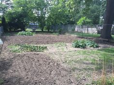 Summer 2016: Once the weeds and trees were removed, we were able to plant a few crops - zucchini, yellow squash, and mini pumpkins.