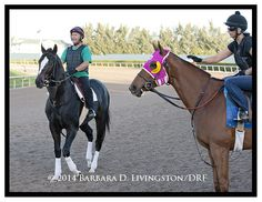 Groupie Doll and Honor Code