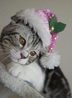 Christmas Animals Postcards for Xmas Christmas Kitten, Christmas Animals, Merry Christmas, Xmas, Christmas Holidays, Happy Holidays, Kittens Cutest, Cats And Kittens, Amor Animal