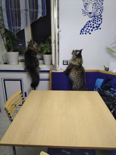 Maine Coon Kater Spirit & Maine Coon Katze Mystery auf morgendlicher Falterjagd Mystery, Spirit, Decor, Arts And Crafts, Cats, Dekoration, Decoration, Dekorasyon, Home Improvements