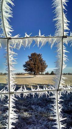 Ghiaccio che ricopre un cancello - Spettacolari formazioni di ghiaccio - Dicembre 2014 - CMI