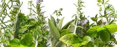 Growing your own small herb garden is just as easy as watering flowers! Small Herb Gardens, Samos, Water Flowers, Grow Your Own, Alternative Medicine, Bloom, Herbs, Plants, Gardening