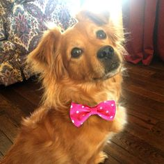 Polka Dot Pet Bow Tie by KoveredUp on Etsy