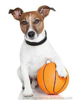 This dog loves sports and can outplay most humans.