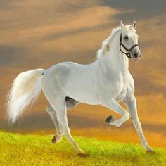 Horse, white beauty, hest, animal, running like the wind, beautiful, gorgeous, grass, cloudy sky, photograph, photo
