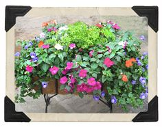 How to Create Interesting and Successful Combination Planters! - The Good Earth Garden Center