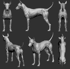 Anatomy Bones, Dog Anatomy, Medical Anatomy, Animal Anatomy, Anatomy Drawing, Anatomy For Artists, Dog Sculpture, Anatomy Reference, Creature Design