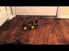 Remote controlled cars are fun, sure, but self-driving robotic cars are even more fun. In this tutorial, we'll build a four-wheeled robot that can drive ar Build A Robot, Arduino Programming, Technology World, Arduino Projects, Remote Control Cars, Home Appliances, Starter Kit, Drones, Middle School
