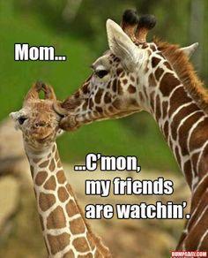 Funny giraffe in the wild Funny Animal Pictures, Funny Photos, Giraffe Pictures, Cute Baby Animals, Funny Animals, Animals Kissing, Crazy Animals, Jungle Animals, Wild Animals
