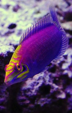 Colorful Fish 15