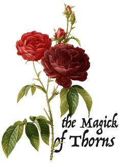 The Magick of Thorns — Worts + Cunning Apothecary   Find Your Remedy + Work Your Magick
