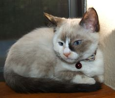 Shenanigans [4]  kitten
