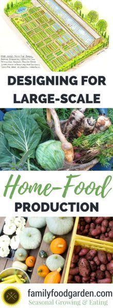 My goal the past many years has been to increase our homegrown food so that we no longer have to buy any produce from the grocery store. Our…