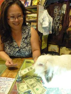 Working Rabbits in Eureka Springs Arkansas...Gives change to customers!!! SO CUTE!