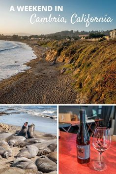 From wine tasting to sightseeing to just lazing on the beach, there are some many things to do in Cambria, California | A Weekend in Cambria