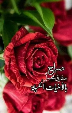 Good Morning Messages, Morning Images, Morning Quotes, Hand Holding Gif, Good Morning Gif Animation, Arabic Funny, Funny Comments, Morning Wish, Beautiful Morning