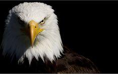 Pílula Motivacional #5 Desperte a Águia que há dentro de você!! | Professor Nayron Toledo