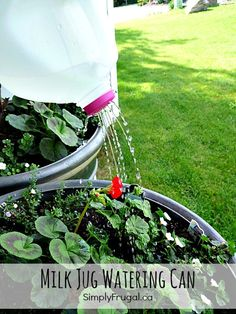 Do you have some eager kids that really want to help out in the garden? I think this milk jug watering can could be the perfect tool for your helpers! It's even easy enough for kids to make themselves, with a little help! Even if you don't have little...