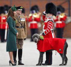 Catherine, Duchess of Cambridge presents a Shamrock to Domhnall (The Irish Wolf Hound Regimental Mascot) as she attends the St Patrick's Day Parade at Mons Barracks on March 17, 2014 in Aldershot, England.