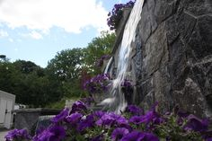 Anthonys Pier 9 Water Feature Garden Pond: Have your Party at Anthonys Pier 9 in New Windsor, Orange County, NY. Hickory Hollow Landscapers has created three great landscapes & water feature garden ponds for your enjoyment!  The garden ponds have been created out of Pa. colonial boulders for those who love the natural look and maplebrook granite veneer for those who are more formal.  This formal water feature has purple petunias cascading over it.