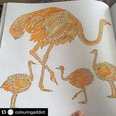 Eu quero! #Repost @colouringaddict ・・・ #wildsavannah #milliemarotta #adultcolouring #adultcoloring