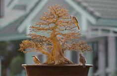 Very attractive defoliated bonsai with fine feathered friends Bonsai Garden, Inspire Others, Winter Time, Bird Feeders, Gardening, Friends, Outdoor Decor, Fun, Beautiful