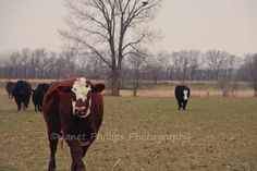 Blog Post    A Farm Wife's Life: Are You My Owner?!?!?!
