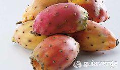 El nopal o chumbera (Opuntia ficus-indica) pertenece a la familia de las cactáceas y, como tal, es una planta espinosa y suculenta, de tallos redondeados e hinchados y hojas reducidas a espinas. El género Opuntia es el más numeroso y más ampliamente distribuido de la familia de los cactus.