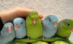 #myBird #MyRightBird