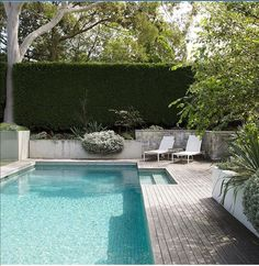 """The pool area is """"relaxed, contemporary and inviting"""", says Peter. The tall hedge is *Cupressocyparis Leylandii* 'Leightons Green'. *Helichrysum petiolare* spills over the wall. The decking is unstained spotted gum. Backyard Pool Landscaping, Pool Fence, Backyard Privacy, Landscaping Equipment, Landscaping Tools, Fence Garden, Landscaping Design, Garden Beds, Kleiner Pool Design"""