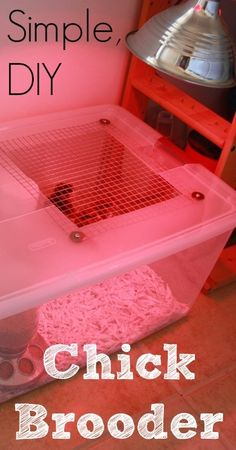 Chick Brooder DIY Chick Brooder - its chick season, keep them warm! DIY Chick Brooder - its chick season, keep them warm! Building A Chicken Coop, Diy Chicken Coop, Keeping Chickens, Raising Chickens, Backyard Farming, Chickens Backyard, Chicken Life, Chicken Chick, Chicken Houses