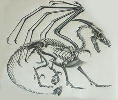 Dragon Skeleton Sketch by Nicole Grosjean
