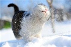 Snow, winter, cat