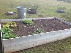 Sept. 2014 Fall garden: This bed had beans & kale in it but both got diseased and ripped out. Planted mesclun transplants to left, leaf lettuce, kale, arugula, spinach, radishes, beets and peas to right. Potato bins in back.