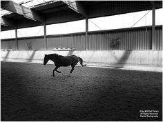 by Wilfried Peters All Rights Reserved  #Fotografie #Photography #Photographie  #Schwarzweiss #BlackandWhite #Noiretblanc #sw #bw #neb  #Pferd #Horse #Cheval  #Deutschland #Germany #Allemagne #NordrheinWestfalen #NRW #OstwestfalenLippe #OWL  22. Juni 2018  Das #Leben ist eine #Reise durch die #Zeit #Travel #Voyage - #Time #Temp