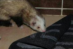 Jack aime le tapis de bain