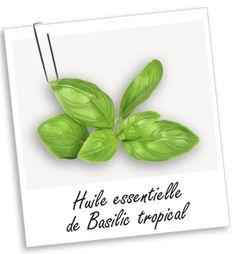 HE Basilic tropical:  revigorante et vitalisante; tonique puissante du système nerveux; combat les troubles nerveux , les problèmes digestifs, les troubles musculaires et les problèmes respiratoires
