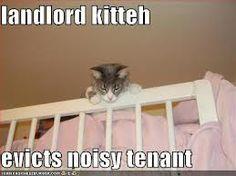 Landlord kitten evicts noisy tenant.