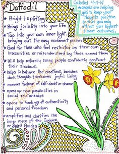 Daffodil Information Pages - PDF download - two (2) downloadable PDF files of my personal hand-written and drawn page on the magical properties of Daffodil flowers and essence. it can be printed on any paper you choose. Good reference page for your Book of Shadows, Grimorie, or Transformation Journal. Over the years I've collected the information from various sources and also from the plants themselves in the collection of essence, petals, leaves, roots and seeds. ~The water mark is for…