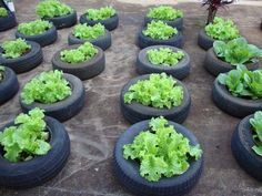Vegetable garden reuses tires and makes students aware of the environment - Jardinagem - Plantio Tire Garden, Bottle Garden, Garden Soil, Edible Garden, Container Plants, Container Gardening, Gardening Tips, Planting Vegetables, Growing Vegetables