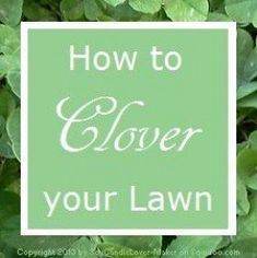 How to Start and Grow Clover: The Ecological Lawn Alternative - Modern Design No Grass Backyard, Backyard Landscaping, Backyard Ideas, Backyard Decorations, Patio Ideas, Landscaping Ideas, Clover Lawn, Lawn Care Business, Lawn Care Tips