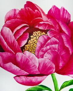 Peony watercolor illustration by Studio Sonate with a touch of gold Touch Of Gold, Watercolor Illustration, Peony, Studio, Rose, Flowers, Plants, Instagram, Design